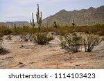 saguaro cactus cereus giganteus ... | Shutterstock . vector #1114103423