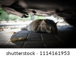 cat hiding in the shade under a ... | Shutterstock . vector #1114161953