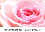 Stock photo pink rose macro 111419570