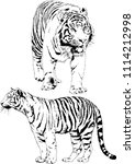 vector drawings sketches... | Shutterstock .eps vector #1114212998