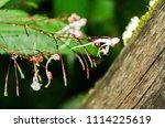 fresh small flower after rain... | Shutterstock . vector #1114225619