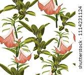tropical plants  paradise... | Shutterstock .eps vector #1114231124