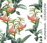 tropical plants  paradise... | Shutterstock .eps vector #1114231250