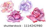 pink rose. floral botanical... | Shutterstock . vector #1114242980