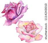 pink rose. floral botanical... | Shutterstock . vector #1114243010