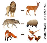 food chain animals. vector... | Shutterstock .eps vector #1114266758
