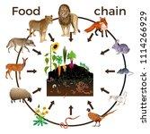 food chain animals. vector... | Shutterstock .eps vector #1114266929