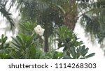 tropical rain drops falling on... | Shutterstock . vector #1114268303