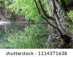 bolu  yedig ller national park  ... | Shutterstock . vector #1114371638