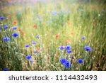 south korea blue cornflower | Shutterstock . vector #1114432493