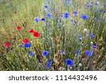 south korea blue cornflower | Shutterstock . vector #1114432496