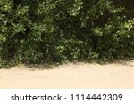 texture of leaves and sand.   Shutterstock . vector #1114442309