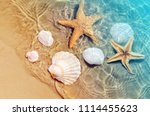 starfish and seashell on the... | Shutterstock . vector #1114455623