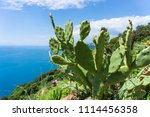 Sea Landscape With Cacti At Th...