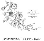 sketch floral botany collection.... | Shutterstock .eps vector #1114481630