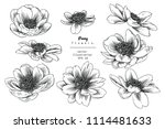 sketch floral botany collection.... | Shutterstock .eps vector #1114481633