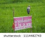 ayutthaya thailand   19th... | Shutterstock . vector #1114482743
