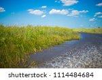 swamp and grass of everglades... | Shutterstock . vector #1114484684