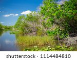 swamp and grass of everglades... | Shutterstock . vector #1114484810