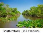 swamp and grass of everglades... | Shutterstock . vector #1114484828