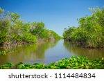 swamp and grass of everglades... | Shutterstock . vector #1114484834