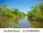 swamp and grass of everglades... | Shutterstock . vector #1114484840