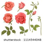 Stock vector set of roses pink red flowers and buds on white background botanical illustration for design 1114544048