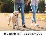 Stock photo owners walking their yellow labrador retriever outdoors 1114574093