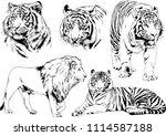vector drawings sketches... | Shutterstock .eps vector #1114587188