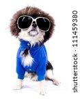 Chihuahua Dog In Glasses
