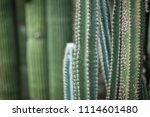close up detail of a beautiful... | Shutterstock . vector #1114601480