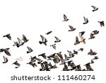 Flying Pigeons Background