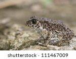 toad | Shutterstock . vector #111467009