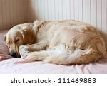 Dog Sleeping On The Bed  ...