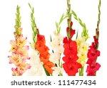 Beautiful Colorful Gladiolus O...