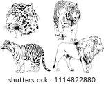 vector drawings sketches... | Shutterstock .eps vector #1114822880