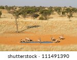A small herd of gemsbok gather to drink at a waterhole in the Kgalagadi Transfrontier Park - stock photo
