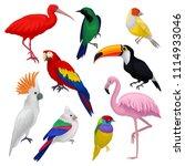 detailed vector set of various...   Shutterstock .eps vector #1114933046