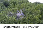the heron sits in a nest with... | Shutterstock . vector #1114939904