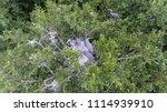 the heron sits in a nest with... | Shutterstock . vector #1114939910