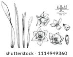 sketch floral botany collection.... | Shutterstock .eps vector #1114949360