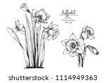 sketch floral botany collection.... | Shutterstock .eps vector #1114949363