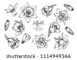 sketch floral botany collection.... | Shutterstock .eps vector #1114949366