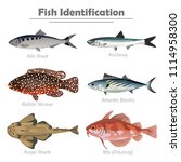 fish icon set. vector realistic ... | Shutterstock .eps vector #1114958300
