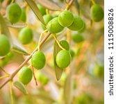 close up of a branch of an... | Shutterstock . vector #1115008826