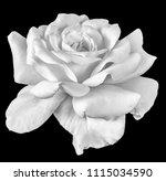 fine art still life monochrome... | Shutterstock . vector #1115034590