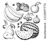 fruit and berry vector drawing... | Shutterstock .eps vector #1115097773