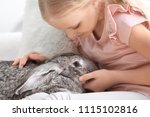 Stock photo little girl with adorable rabbit indoors 1115102816
