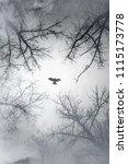 falcon flying in sky over... | Shutterstock . vector #1115173778