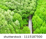 Mangrove Forest View In The...